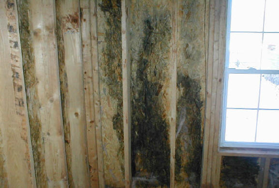 cleaning services camden found mould in wall cavities